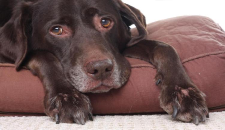 Euthanasie voor huisdieren
